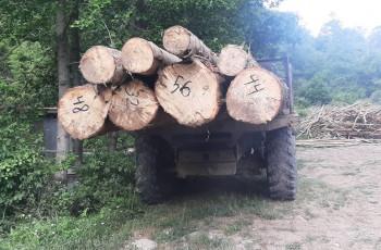 ხაშურისა და ქარელის სოფლებში ხე-ტყის უკანონო ტრანსპორტირების 5 ფაქტი გამოავლინეს