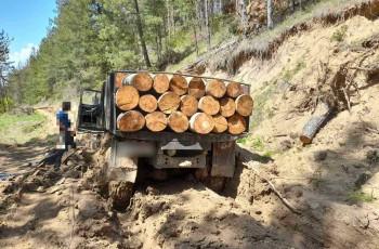 ხაშურის მუნიციპალიტეტის სოფლებში ხე-ტყის უკანონო ტრანსპორტირების 12 ფაქტი გამოავლინეს