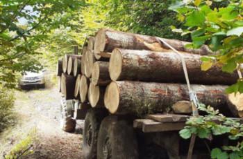 ხე-ტყის უკანონოდ მოპოვებაში ქრთამის აღებისთვის გარემოს დაცვის სამინისტროს მაღალჩინოსანი დააკავეს