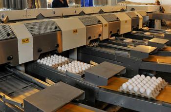 საქართველოში კვერცხის ფასი იზრდება